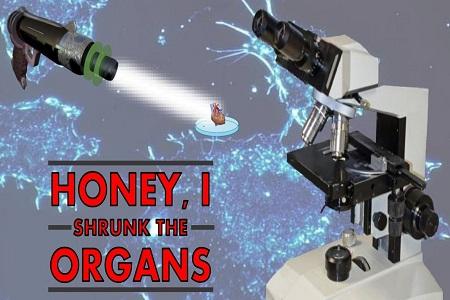 Honey, I Shrunk the Organs
